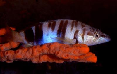 pesce_corallo.jpg